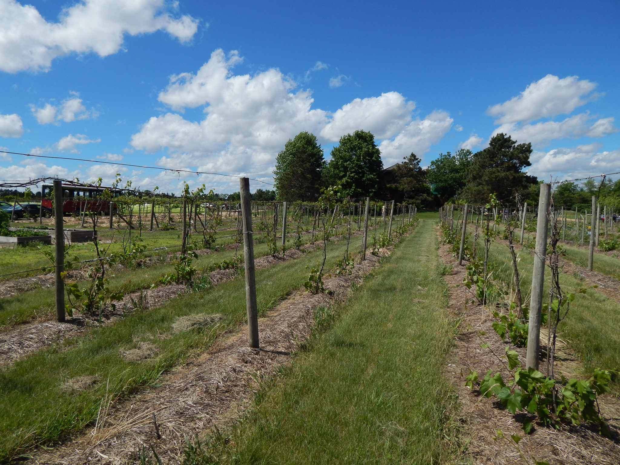 It was a beautiful day and my friend Melissa and I strolled through the vineyard as we sampled wine.