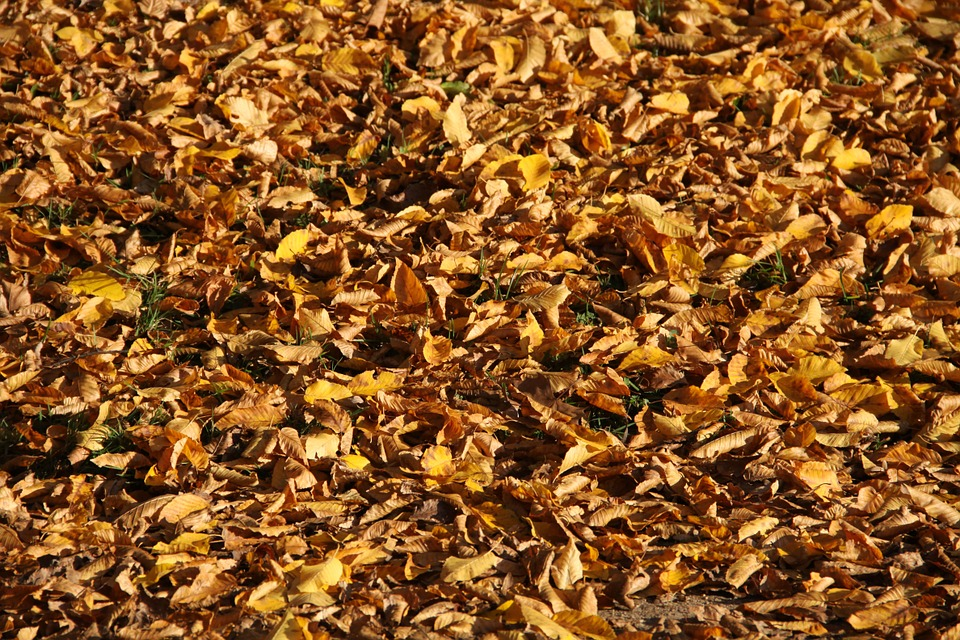dead leaves ground haiku