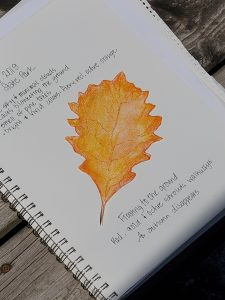 Nature journaling example